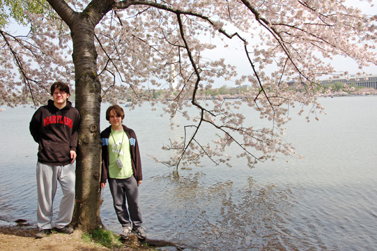 little reviews  poem for sunday and cherry blossoms